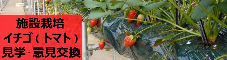 イチゴ&トマト | 施設栽培