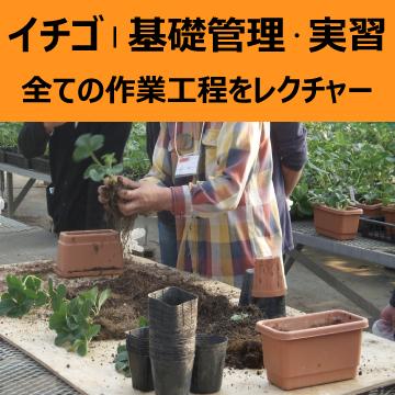 イチゴ | 基礎管理・実習