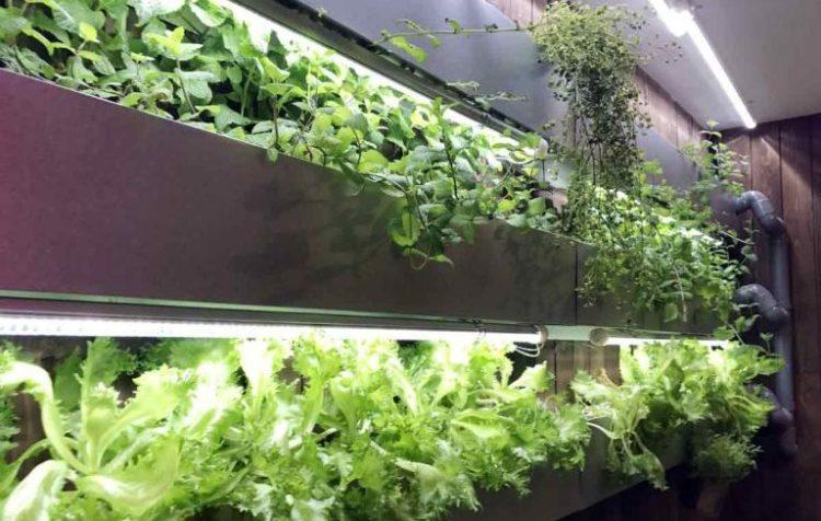 店産店消型 植物工場レストランのプロデュース