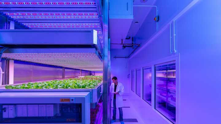 世界の植物工場・水耕栽培における市場規模は?