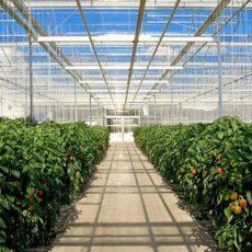 米国・カナダの太陽光利用型植物工場の市場規模&普及面積