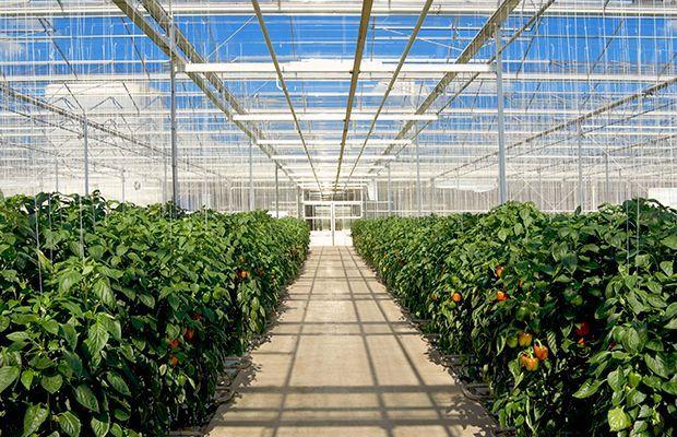 米国・カナダの太陽光利用型植物工場の市場規模、普及面積について
