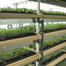 三菱ケミカル(旧・三菱樹脂)による植物工場を活用した甘草栽培