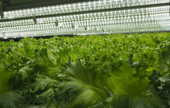 植物工場向け LED光源の導入費用 ~コスト分析~