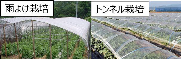 2020年版「施設園芸・植物工場の市場動向~太陽光利用型~」