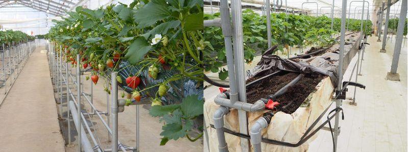 2020年 養液栽培や植物工場の普及率に関する最新データ②