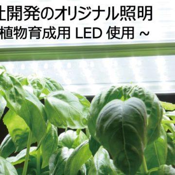 植物工場でのバジル栽培実験・設計デザインにおける注意点