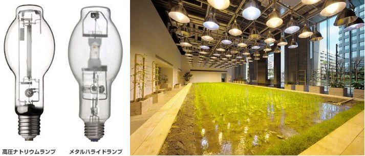 植物工場における「光源の種類」と「光量の単位」