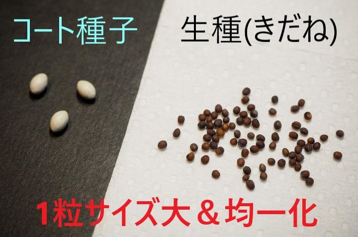植物工場で使用する種子の種類や価格、保存方法などの注意点